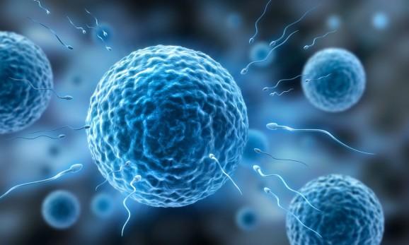 Mehrere Eizellen und Spermien